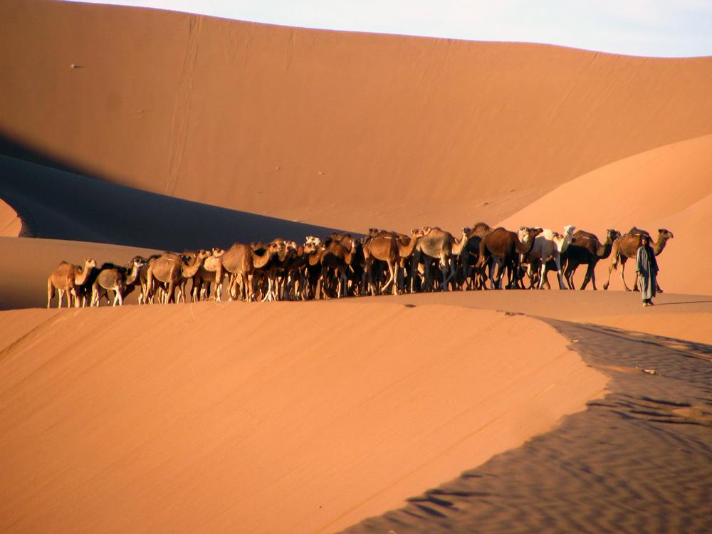 Excursion 4x4 Maroc - Ballade en chameau dans le désert